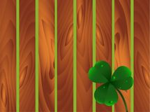 Spring plant fhree-leafed clover with dew or water drops on wooden brown garden fence background. St. Patrick`s day, Saint, Patri Royalty Free Stock Images