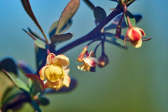 Spring plant with flowers and berries. Main object and natural sky/green background. Spring plant with flowers and berries. Soft main object and natural sky/ stock image