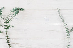Spring plant over white wooden background. Stock Photos
