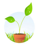 Spring Plant In Pot Stock Photos