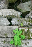 Spring Plant & Weathered Block Wall #2 Stock Photo