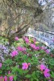 Spring Plantation Garden South Carolina Stock Image