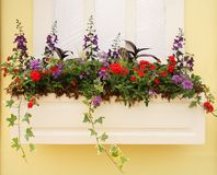 Spring Planter outside a Window Royalty Free Stock Photo