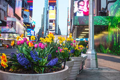 Spring Planters Times Square. NEW YORK-APRIL 14: Spring flowers near the the renovation of the Marriott Marquis hotel in Times Square on April 14 2014 in New royalty free stock photos