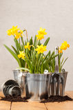 Spring Planting Stock Image