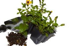 Spring planting Royalty Free Stock Photos