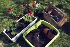 Spring planting flowers Gardening tools. Hobby and leisure activity. Selective focus royalty free stock photos
