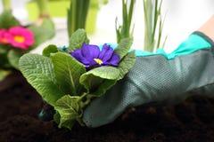 Spring planting pot plants Stock Image