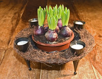 Spring plants. A decorative basket of hyacinths and candles Stock Photography