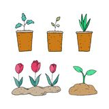 Spring plants in pots on a white background stock illustration