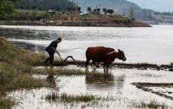 Spring ploughing in shengzhong lake in sichuan,china Royalty Free Stock Photography
