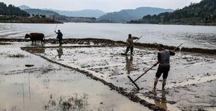 Spring ploughing in shengzhong lake in sichuan,china Stock Photo