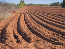 Spring Plowed Field Stock Photo