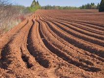 Spring Plowed Field Stock Photo