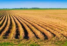 Spring plowed field Stock Photography