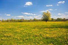 Spring in Poland Royalty Free Stock Photos