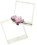 Spring Polaroids. Two polaroid frames overlapping with a cut of spring blossoms across them Stock Photos