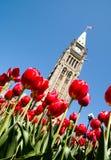 Spring Politics Stock Photo
