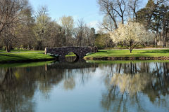 Spring Pond royalty free stock image