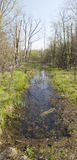 Spring pond. Spring breeding pond for amphibians from north-eastern United States royalty free stock image