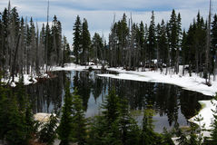 Spring pond and forest Royalty Free Stock Images