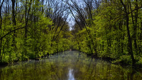 Spring pond Stock Images