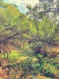 Spring pond, photographed at Botanical gardens, Bloemfontein