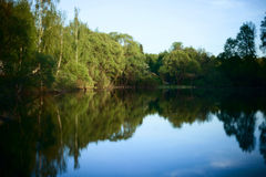 Spring pond. Reflecting the blue sky and surrounded by green trees Stock Image