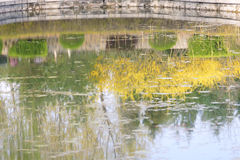 Spring pond Royalty Free Stock Photos