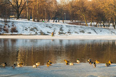 Spring Pond, but the snow has melted more there Royalty Free Stock Images