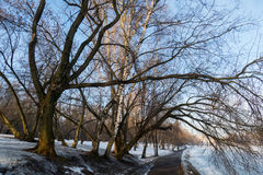 Spring pond and trees in the morning. Winter Lake and tree in the morning MOSCOW MARCH 10, 2016 stock photography