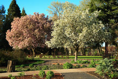 Spring portraits. Pair of trees bloom in the park during the spring season Stock Photos