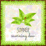 Spring positive postcard. Summer positive postcard for congratulations with beginning of summer. Green leaves with dew drops and ladybugs. Summer card. Summer Stock Image