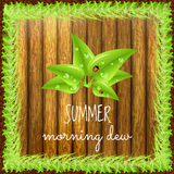 Spring positive postcard. Summer positive postcard for congratulations with beginning of summer. Green leaves with dew drops and ladybugs. Summer card. Summer Stock Photo