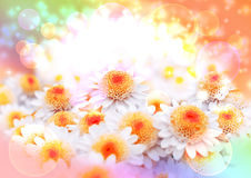 Spring postcard. Spring card with white flowers on a rainbow background stock photography