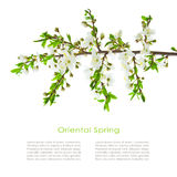 Spring postcard Royalty Free Stock Images
