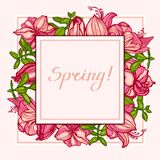 Spring! Postcard with flowers Amaryllis, Hippeastrum and succulents Crassula. Square composition. Invitation, congratulation card. stock illustration