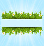 Spring postcard with grass field and flowers chamomiles. Illustration spring postcard with grass field and flowers chamomiles, copy space for your text - vector Stock Photos