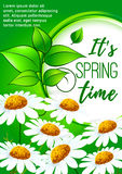Spring poster design with daisy flowers Royalty Free Stock Images
