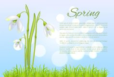 Spring Poster with Text and Snowdrop Galanthus Bud. Spring poster with text and snowdrop galanthus bell shaped flower vector illustration isolated on blurred Royalty Free Stock Photo