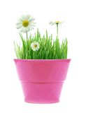 Spring in a pot Stock Image