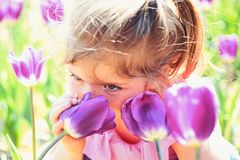 Spring in pot. Small child. Natural beauty. Childrens day. Summer girl fashion. Happy childhood. Springtime tulips royalty free stock image