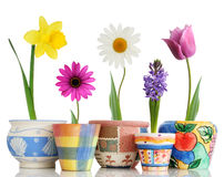 Spring in pots. Colorful spring flowers in fun ceramic containers stock photos