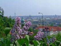 Spring in Prag Stock Photography