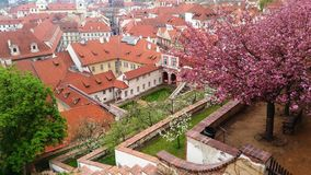 Spring in Prague blossom trees royalty free stock image