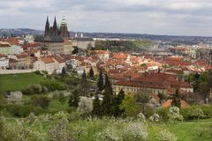 Spring Prague City with gothic Castle and the green Nature and flowering Trees, Czech Republic Stock Images