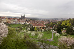 Spring Prague City with gothic Castle and the green Nature and flowering Trees, Czech Republic Royalty Free Stock Image
