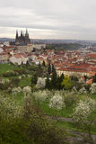 Spring Prague City with gothic Castle and the green Nature and flowering Trees, Czech Republic Royalty Free Stock Photo
