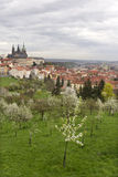 Spring Prague City with gothic Castle and the green Nature and flowering Trees, Czech Republic Stock Photo