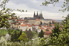 Spring Prague City with gothic Castle and the green Nature and flowering Trees, Czech Republic Stock Image